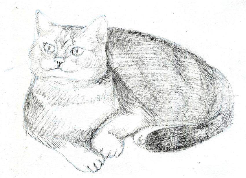 Урок карандаш кот