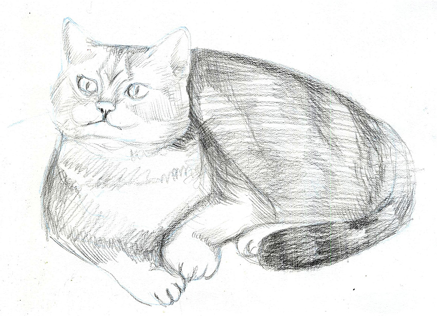 Мастер класс рисунок кота