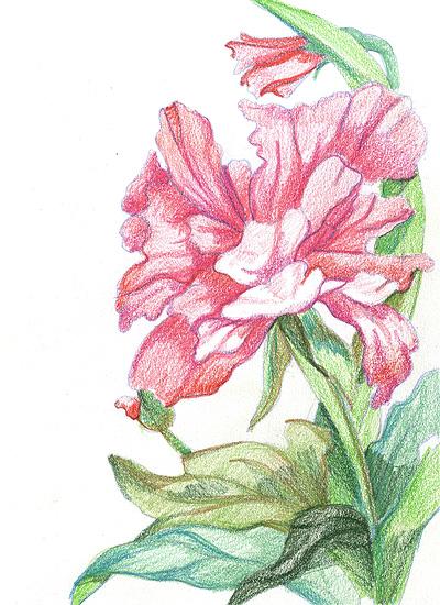 сочинение про цветок 4 класс