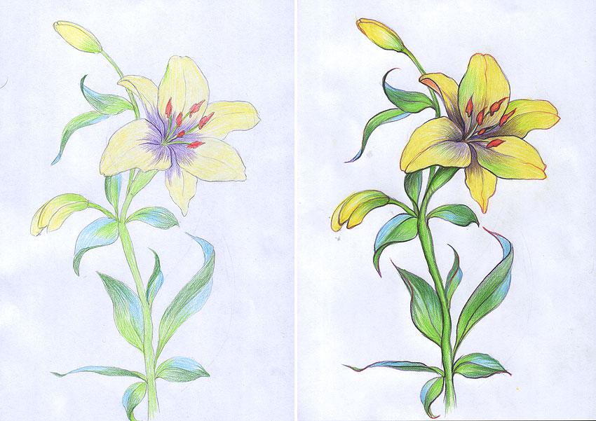 Как нарисовать лилия цветок
