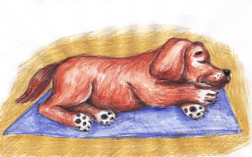 Как нарисовать собаку мелками