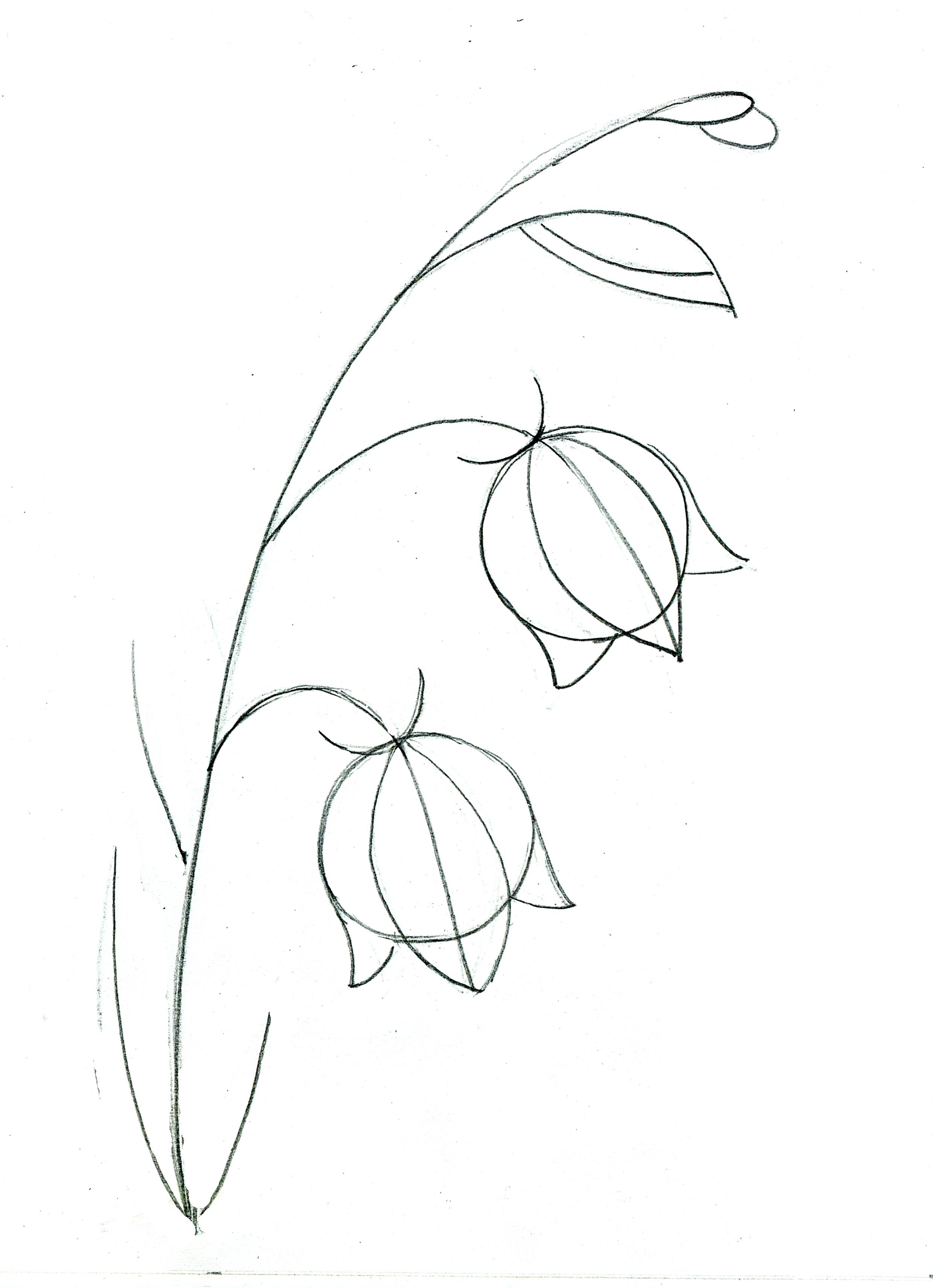 Рисуем цветок - колокольчик поэтапно цветными карандашами STABILO CarbOthello