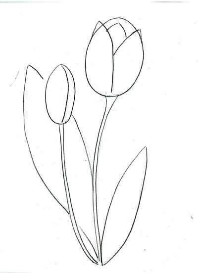 Рисуем тюльпан поэтапно цветной пастелью STABILO