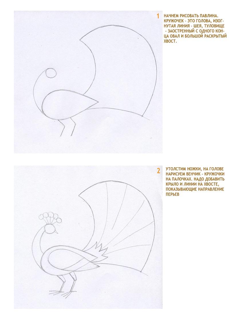 Как рисовать павлина карандашами
