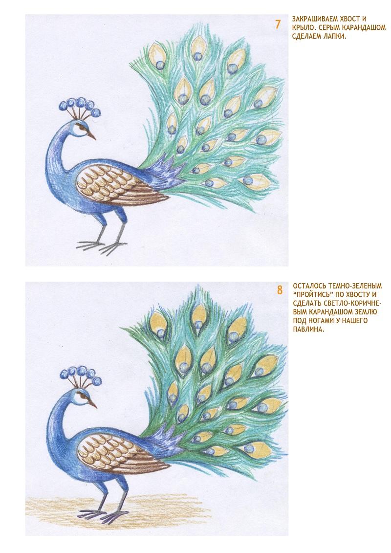 Как нарисовать павлина?