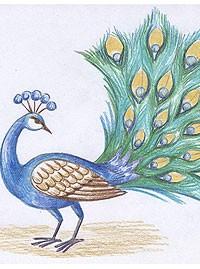 Как красками нарисовать павлина