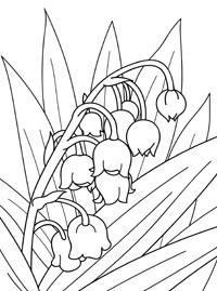 Раскраски растения и цветы
