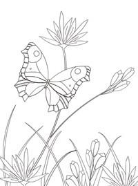 Запросу раскраска бабочка на цветке