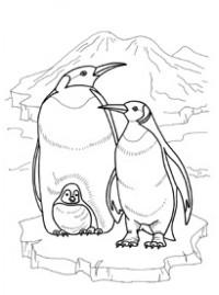 Снегирев про пингвинов раскраска