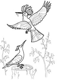 как нарисовать птицу удода видео